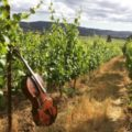 A cello sits in the foreground of a vinyard