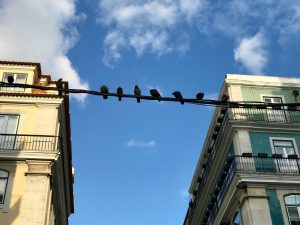 A group of crows sits on a wire between two buildings against a blue sky