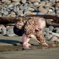 A toddler in a leopard print faux fur jacket stoops to intently poke at rocks and sand on a rocky beach